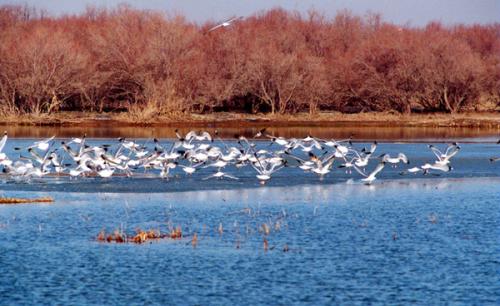 Nanhai wetland scenic offers free admission2