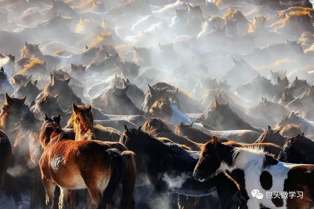 挑剔的蒙古马 蒙古马生命力强,但又是很讲究、很挑剔的马种,在水草丰沛的时节,它必饮清澈之水,必食新鲜之草,通常只吃新鲜的草尖,而且不同季节吃不同的草。草原上的蒙古马,总是保持一身光洁。可能也正是这种能屈能伸的生存智慧,让蒙古马成为著名的军马种类。